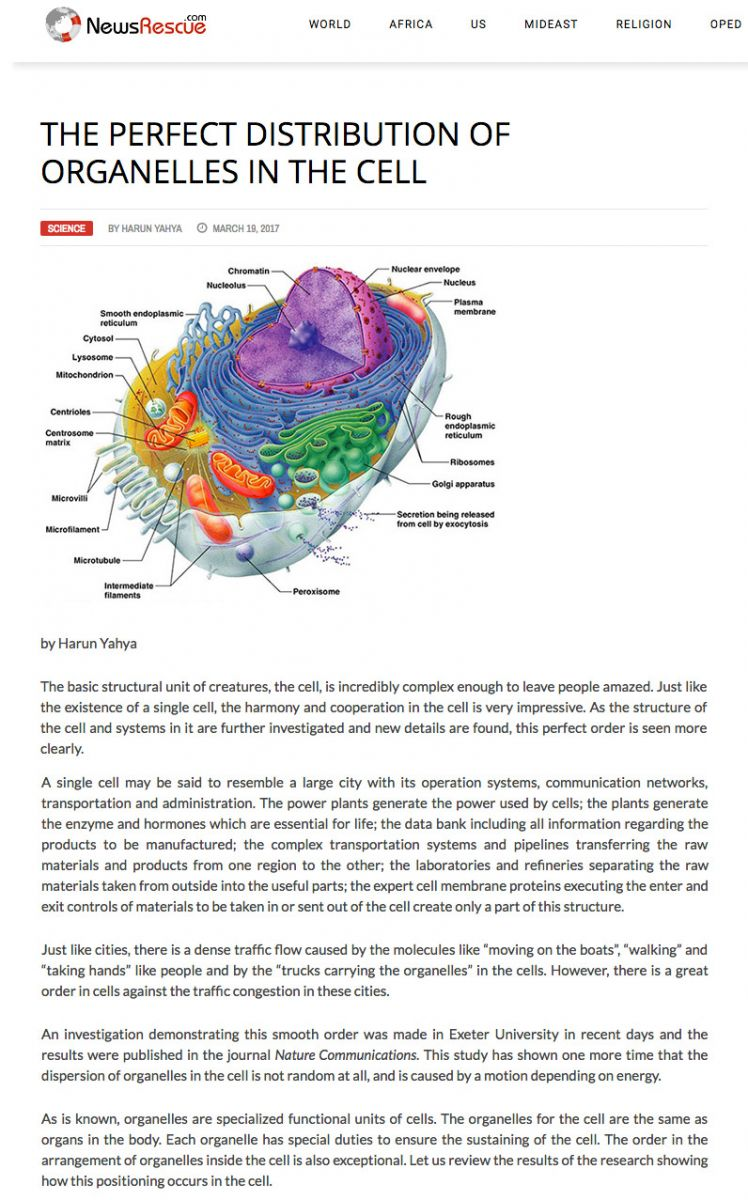 Hücredeki Organellerin Kusursuz Dağılımı